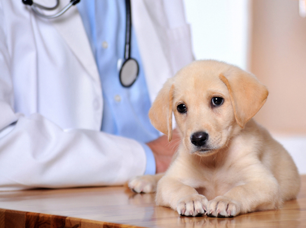 Missoula Pet Clinic Insurance